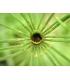 Gel Jambes Légères - Circulatonic